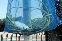 Pescados atrapados en un bolso de la malla Fotografía de archivo