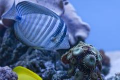 Pescados azules Imagen de archivo