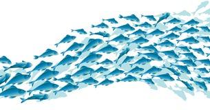 Pescados azules de la escuela en el fondo blanco Foto de archivo libre de regalías