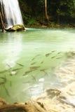 Pescados bajo el agua Imagen de archivo