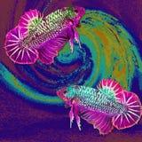 Pescados - Betta Siamese, dibujando en el fondo del mosaico Fotografía de archivo