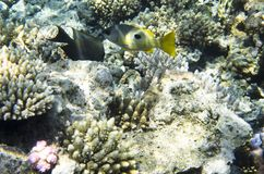 Pescados brillantes cerca del coral Imágenes de archivo libres de regalías
