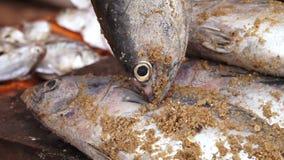 Pescados cogidos cubiertos en arena almacen de metraje de vídeo