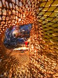Pescados cogidos en la jábega, pescando Imagenes de archivo