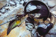 Pescados cogidos en un arma de lanza fotos de archivo
