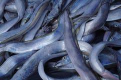 Pescados cogidos por la red del pescador Fotos de archivo libres de regalías