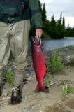 Pescados cogidos tenencia del pescador por el río imagenes de archivo
