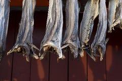 Pescados colgados para secarse imágenes de archivo libres de regalías