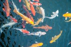 Pescados coloreados Foto de archivo