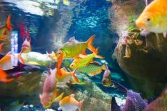 Pescados coloreados Foto de archivo libre de regalías