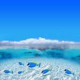Pescados coloridos Fotos de archivo libres de regalías