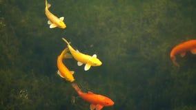 Pescados coloridos almacen de metraje de vídeo