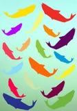Pescados coloridos Fotografía de archivo libre de regalías