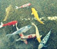 Pescados coloridos Fotos de archivo