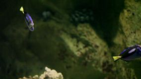 Pescados coloridos del acuario almacen de video