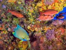 Pescados coloridos en plataforma petrolera subacuática fotografía de archivo libre de regalías