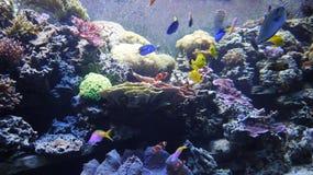 Pescados coloridos subacuáticos Foto de archivo