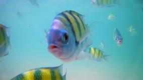 Pescados coloridos subacuáticos almacen de metraje de vídeo