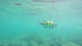 Pescados coloridos subacuáticos, agua tropical en Tailandia Phuket - el mar de Andaman almacen de video