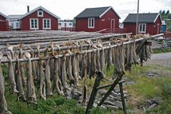 Pescados comunes Foto de archivo libre de regalías