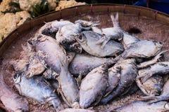 Pescados con la sal Foto de archivo