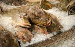 Pescados CONGELADOS Imagen de archivo libre de regalías