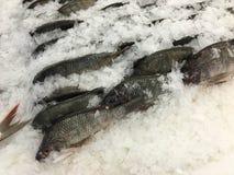 Pescados congelados (de la Tilapia) fotografía de archivo