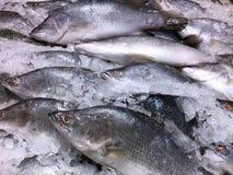 Pescados congelados en una pila de hielo Imágenes de archivo libres de regalías