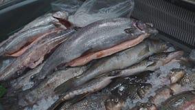 Pescados congelados frescos en el contador del mercado almacen de metraje de vídeo