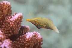 Pescados coralinos Fotografía de archivo
