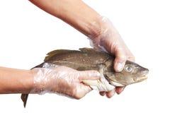 Pescados crudos. Fotos de archivo