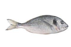 Pescados crudos (auratus del sparus) imágenes de archivo libres de regalías