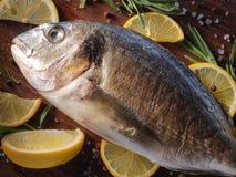 Pescados crudos del dorado con romero y sal del mar Foto de archivo libre de regalías