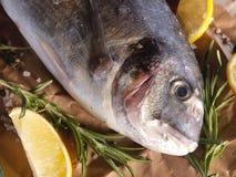 Pescados crudos del dorado con romero y sal del mar Imagenes de archivo