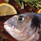 Pescados crudos del dorado con romero y sal del mar Fotografía de archivo libre de regalías