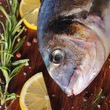 Pescados crudos del dorado con romero y sal del mar Fotos de archivo libres de regalías