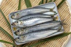 Pescados crudos frescos del capelín de la sardina en la bandeja de bambú con la hoja verde Imagen de archivo