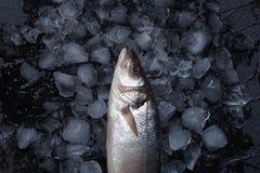 Pescados crudos frescos en el hielo Visión superior foto de archivo