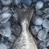 Pescados crudos frescos en el hielo Visión superior fotografía de archivo