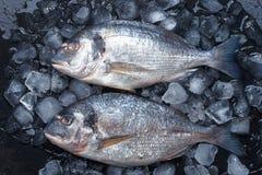 Pescados crudos frescos en el hielo Visi?n superior imagen de archivo