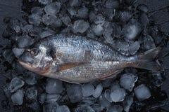 Pescados crudos frescos en el hielo Visi?n superior fotografía de archivo