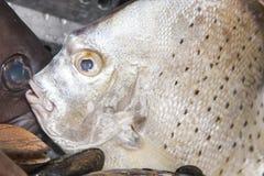 Pescados crudos frescos en mercado de pescados Fotografía de archivo libre de regalías