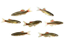 Pescados de agua dulce imagen de archivo libre de regalías