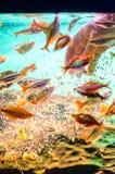 Pescados de alimentación Fotos de archivo libres de regalías