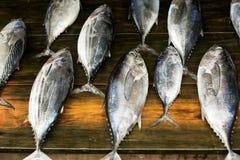 Pescados de atún Foto de archivo libre de regalías