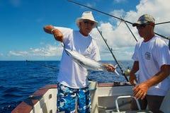 Pescados de atún del arreglo de la gente como cebo para la pesca de la aguja, en el mar cerca de St Denis, Reunion Island foto de archivo