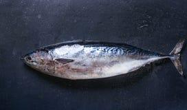 Pescados de atún frescos crudos Fotografía de archivo libre de regalías