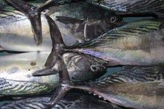 Pescados de atún frescos en el mercado Imagen de archivo libre de regalías