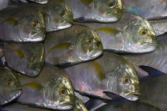 Pescados de atún frescos en el mercado imagen de archivo