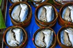 Pescados de atún gemelos Fotos de archivo libres de regalías